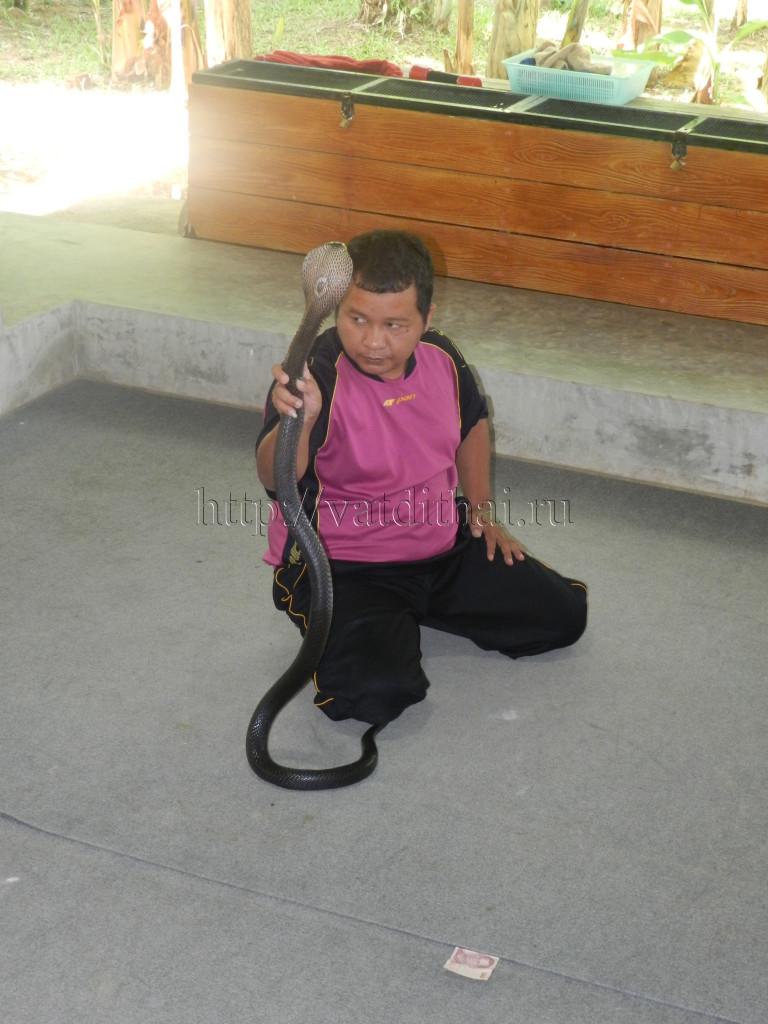 Тайские змеиные фермы