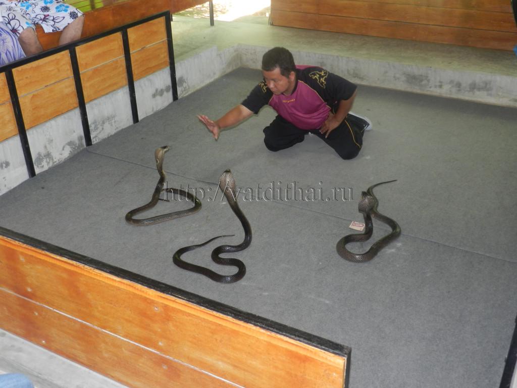 змеи самуи таиланд остров ферма смотреть