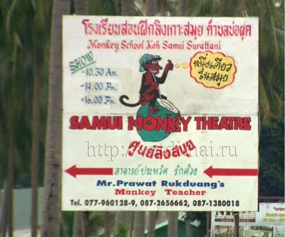школа театр самуи таиланд обезьяны