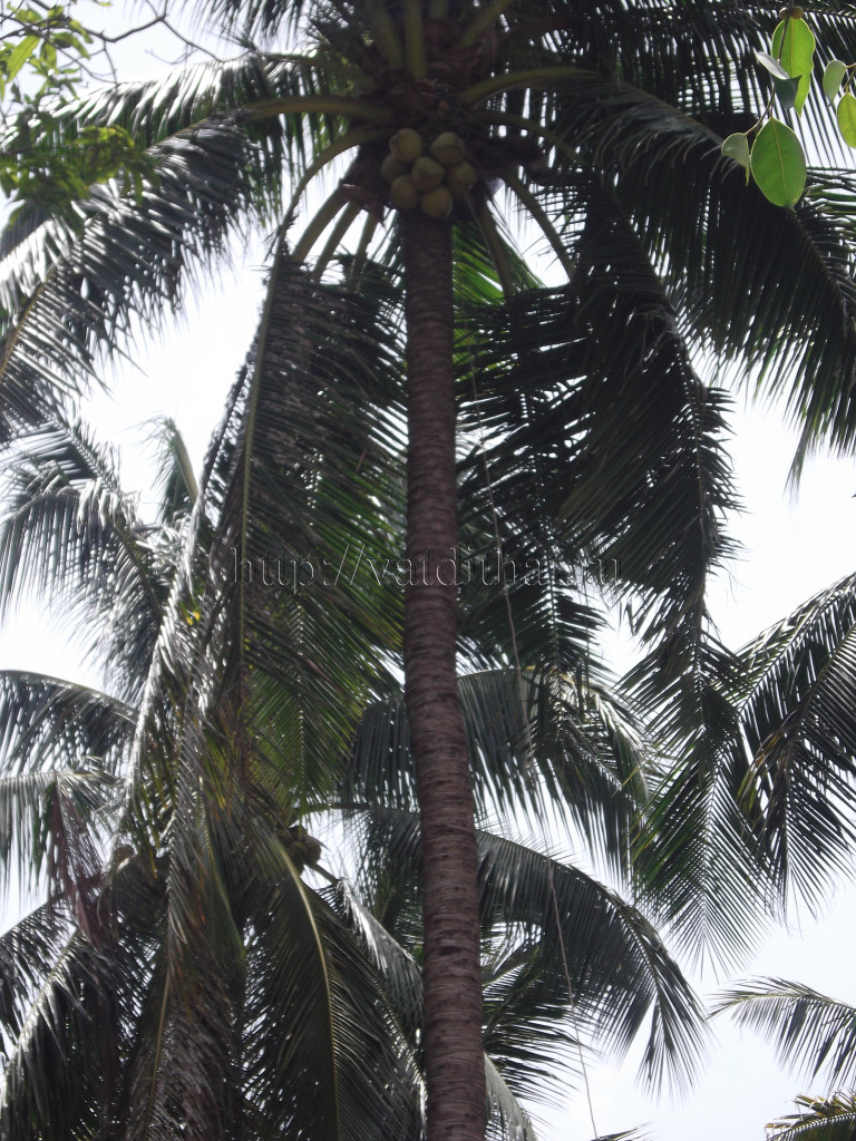 самуи обезьяны остров кокосы таиланд