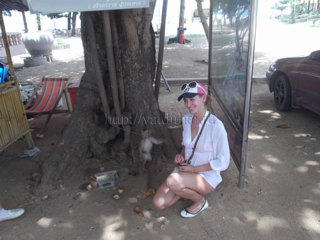 самуи таиланд обезьяны