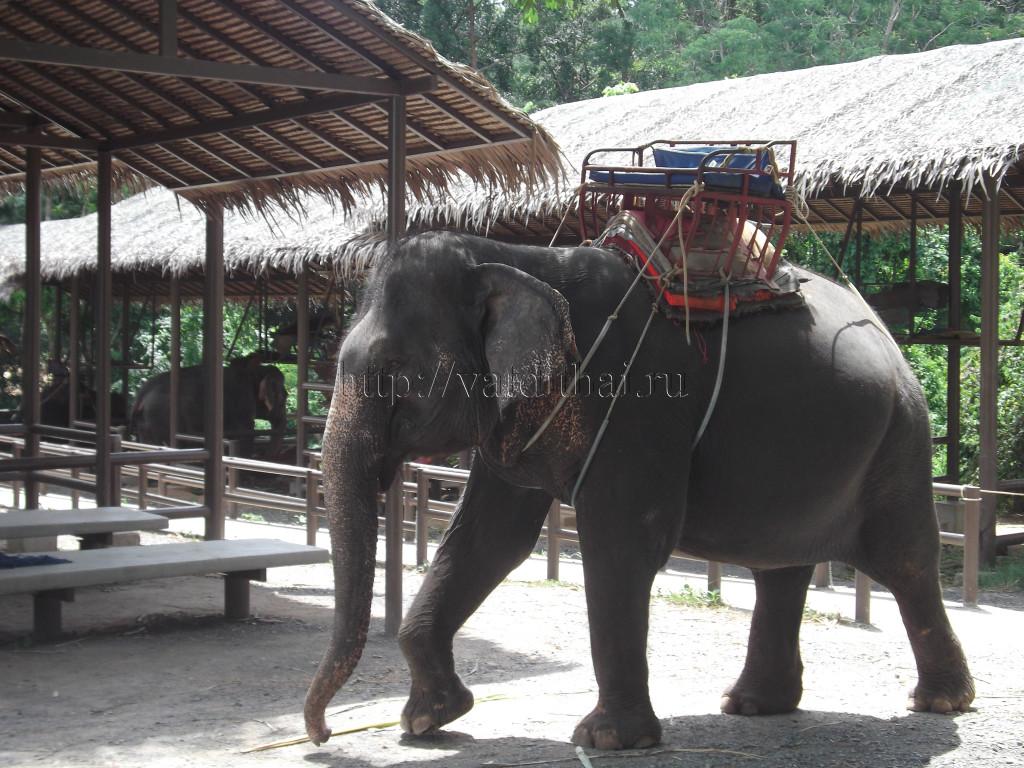 слон самуи таиланд смотреть