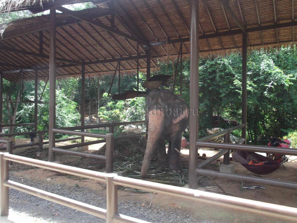 Слоновая ферма