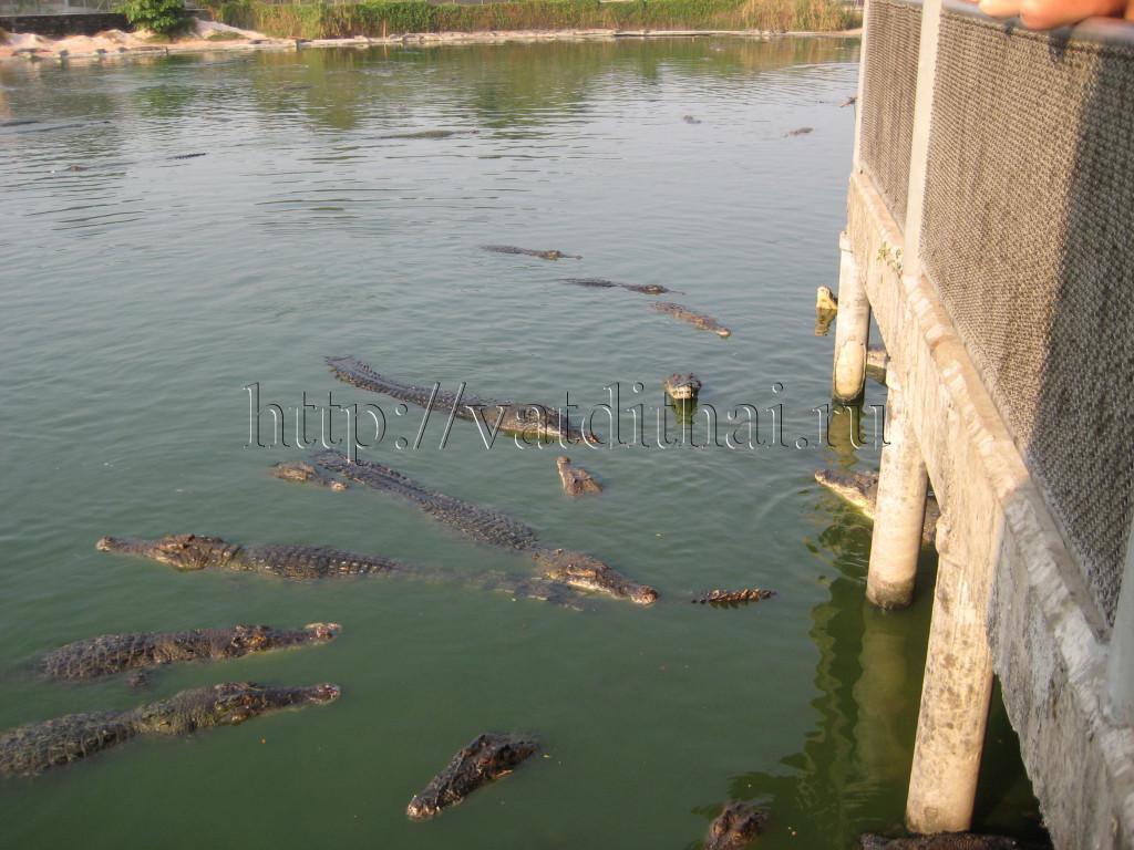крокодилы самуи таиланд остров