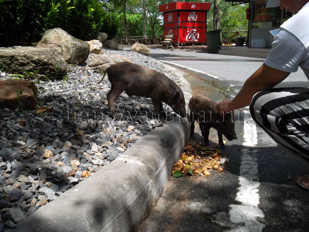 Открытый зоопарк в Паттайе