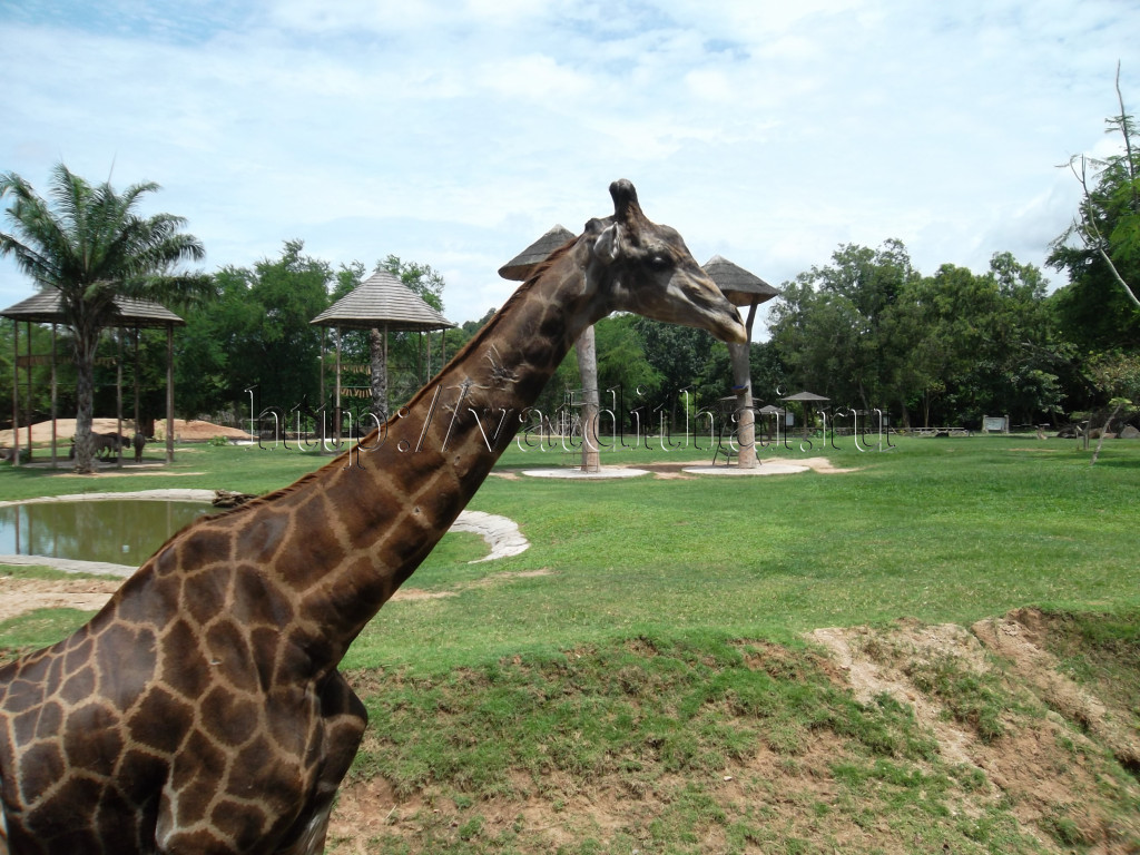 Открытый зоопарк Кхао Кхео