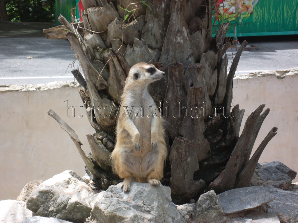 Зоопарк в Паттайе