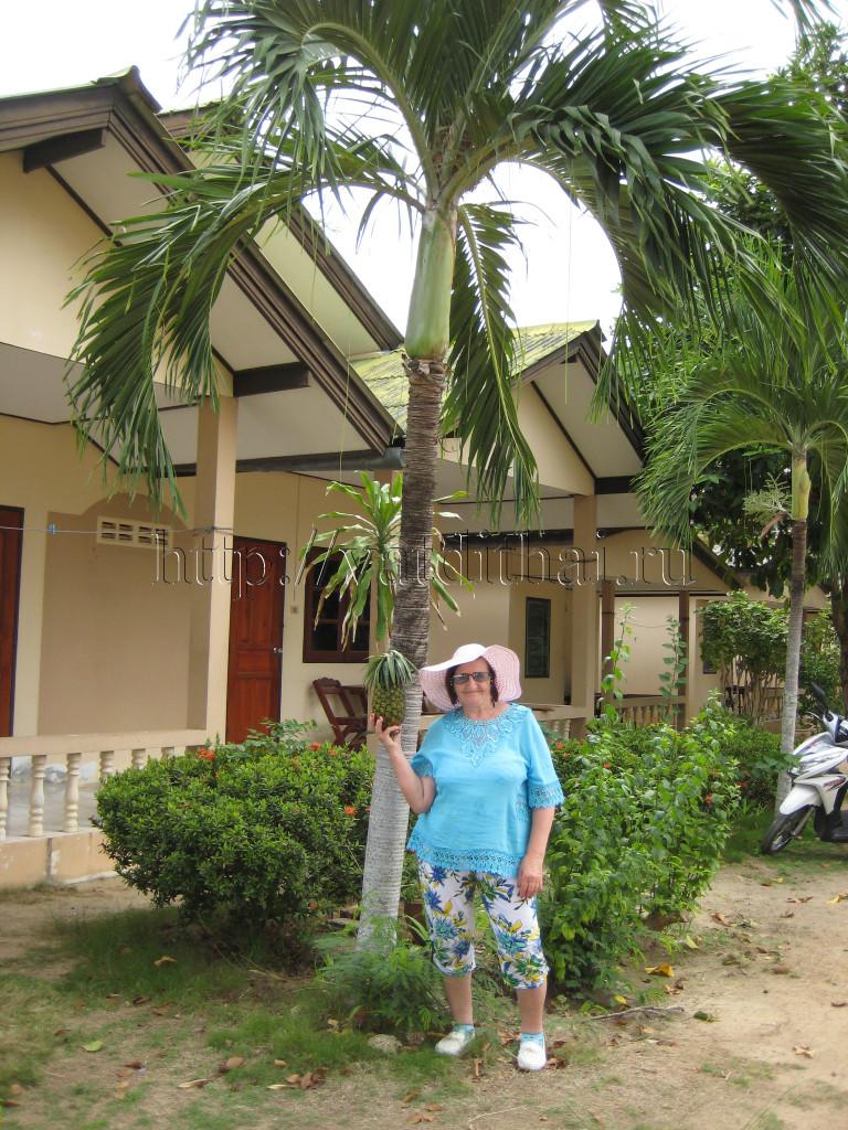 Снять отель в Тайланде
