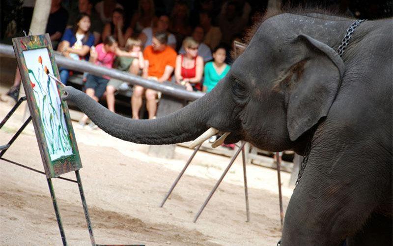 Таиланд шоу слонов