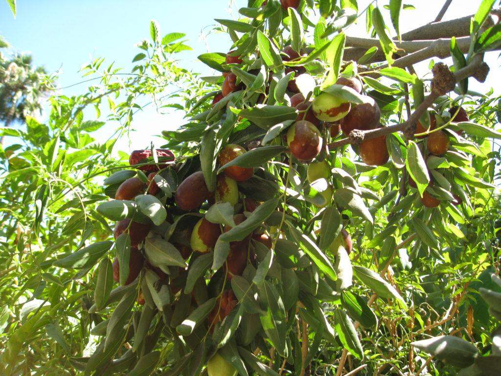 Экзотические фрукты фото Таиланд