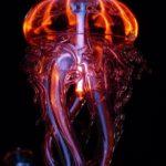 Чем страшны медузы в Тайланде для туристов. Как уберечься от опасности