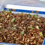Скорпион на вкус: руководство по поеданию насекомых в Таиланде