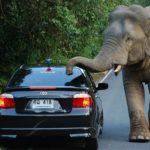 Слон в Таиланде напал на водителя авто..